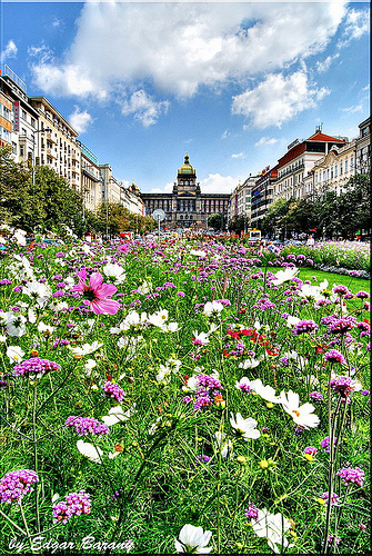 Wenceslas Square flickr image
