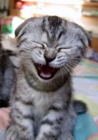laughing image on flickr