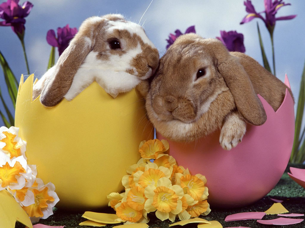 Easter google image
