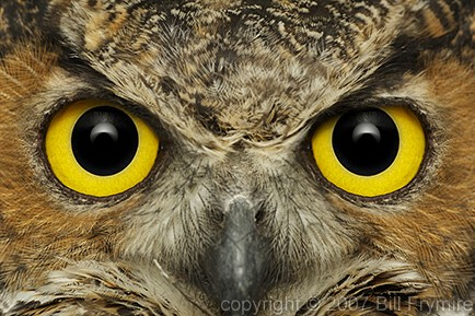 owl eyes / http://www.billfrymire.com
